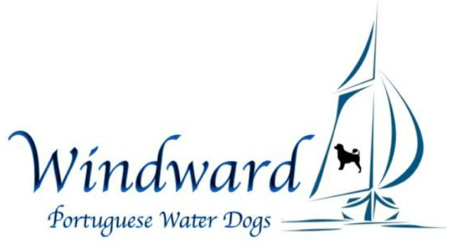 Windward Portuguese Water Dogs